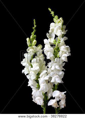 clustered flowers on black