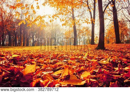 Fall landscape, sunny fall park lit by sunshine - sunny fall landscape in bright sunlight. Fall October park sunny scene, fall sunny landscape view. Fall park landscape