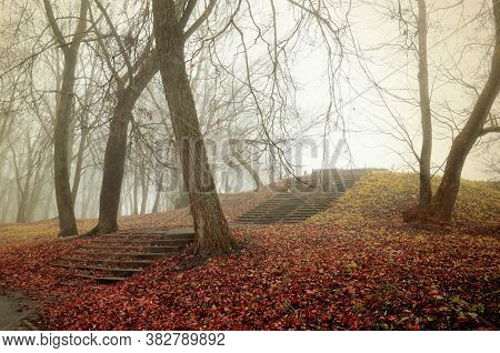Autumn foggy forest. Old bare forest trees, ruined stone staircade and fallen red leaves on the ground. Mysterious forest autumn landscape in vintage tones