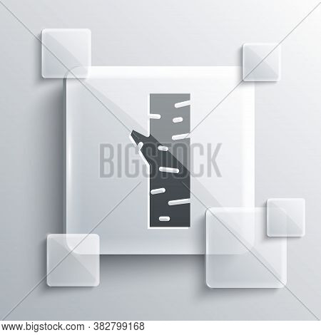 Grey Birch Tree Icon Isolated On Grey Background. Square Glass Panels. Vector