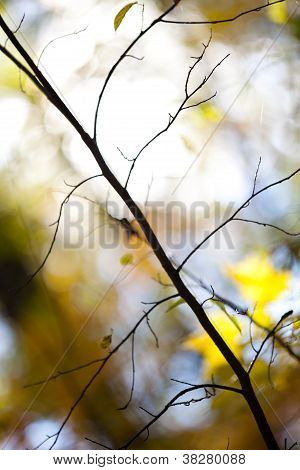 Close Up Image Of A Bare Branch