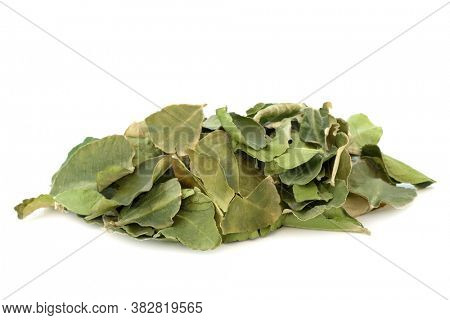 Kaffir lime leaf herb used in herbal medicine for oral health, to boost skin health, detoxify the blood, indigestion, flatulence, dandruff and nausea, on white background. Citrus hystrix.