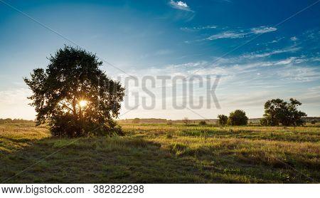 Impressive Sceenic View Of Big Solitary Oak Tree In Golden Sunset, Blue Sky. Beautiful Rural Lanscap
