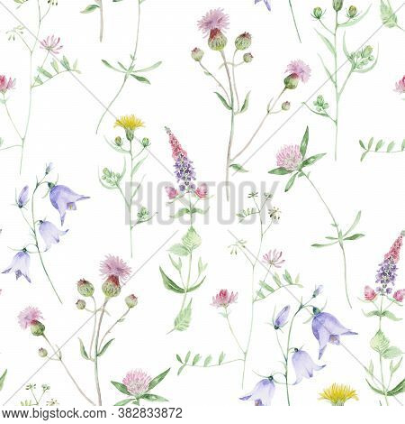 Watercolor Wildflower Seamless Pattern. Clover And Bell Wild Flowers. Floral Hand Drawn Texture Isol