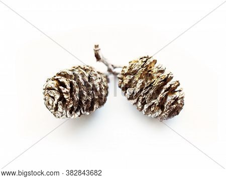 Sprig With Alder Cones On A White Background