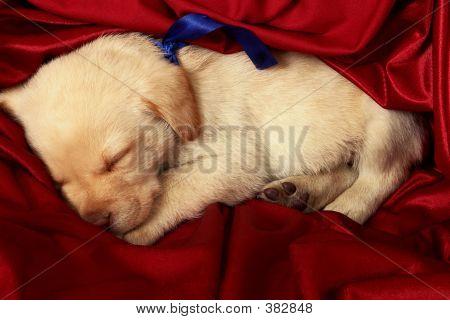 Puppies11