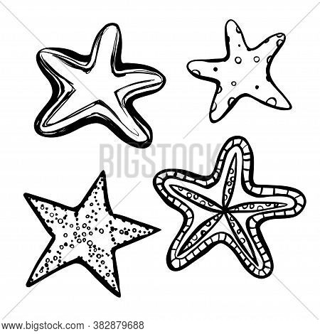 Sea Star Black Line Illustration Set On White Background. Five Tentacles Mollusk. Sea Bottom Animal.