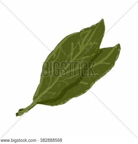 Bay Leaves Seasoning For Cooking Green Leaves