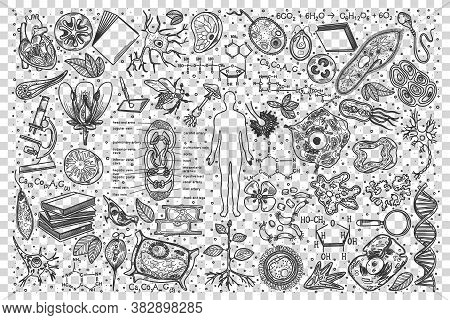 Biology Doodle Set. Collection Of Hand Drawn Sketches Templates Drawing Patterns Of Biological Part
