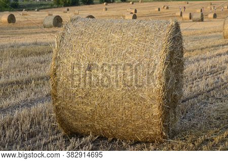 Field With Straw Bales After Harvest On A Background Cloudy Sky