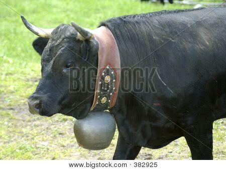 swiss fighting bull poster