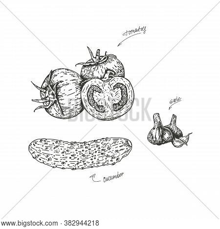 Vector Illustration Of Tomatoes And Cucumber With Garlic, Drawn By Hand. Isolate The Tomatoes And Cu