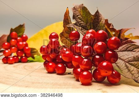 Autumn Background. Viburnum Branches With Berries And Leaves On A Wooden Background. Selective Focus