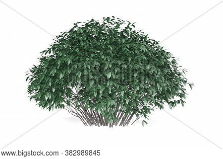 Bush Isolated On White Background - 3d Render