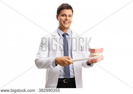 Male dentist showing how to brush teeth with a model jaw isolated on white background