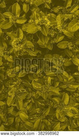 Duotone Flowers On Dark Green, Vertical Template. Background For Text And Design.