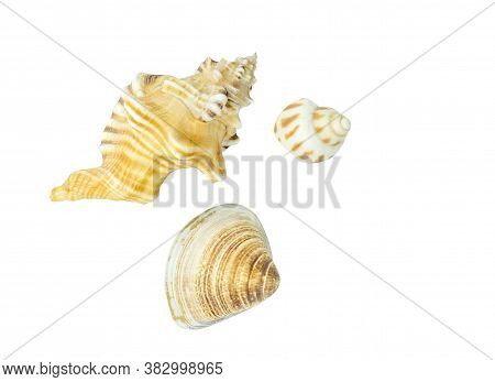 Different Kinds Of Seashell On White Background. Isolated Close Up Image With Clipping Path Around S