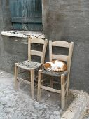 Scene in small greek city - two chairs and one cat in the background of grey wall poster