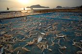 Fish were airing on the panel.With the morning sun.Samroyyod beach Prachuap Khiri Khan Thailand. poster