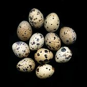 A pile of quail eggs against black background poster
