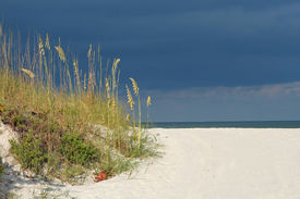 Seaoats By The Sea