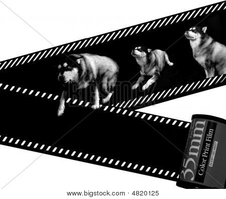 Dog And Film
