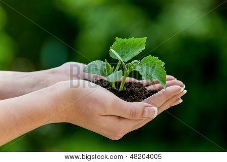 Frau hält die Pflanze in der hand. symbolische Foto für Wachstum und Gewinn