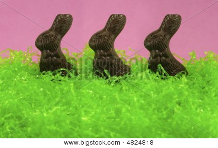 Chocolate Bunny Trio