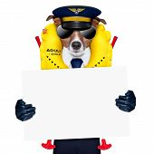 pilot captain dog wearing emergency life vest holding a placard poster
