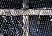 A closeup of a section of a bird aviary made with a wooden frame and bound in wire mesh on a dark background poster