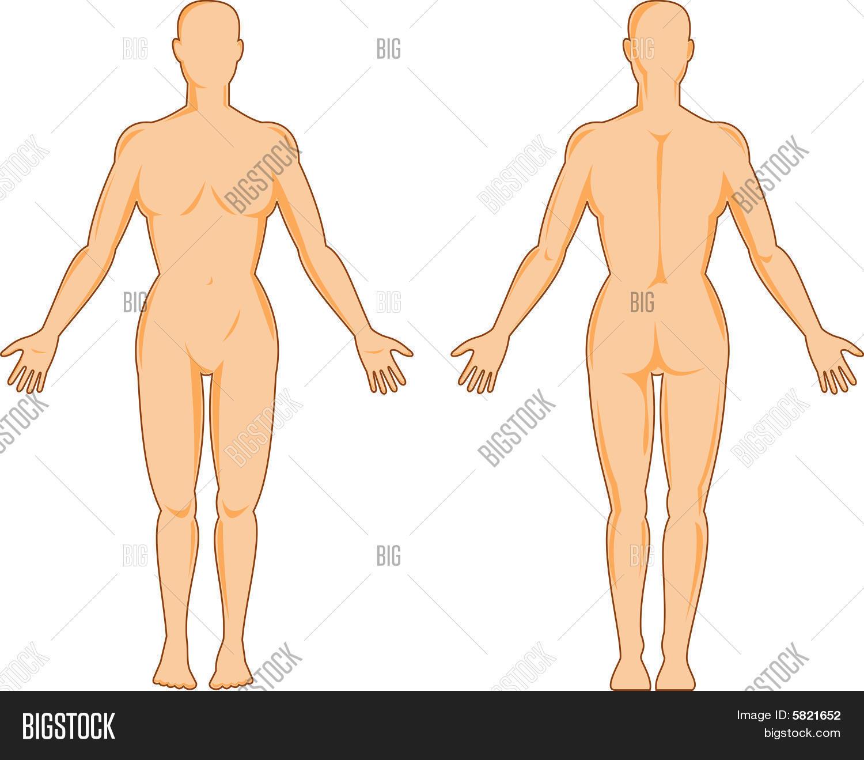 Vector y foto Anatomí Humana (prueba gratis) | Bigstock