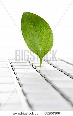 Nature online