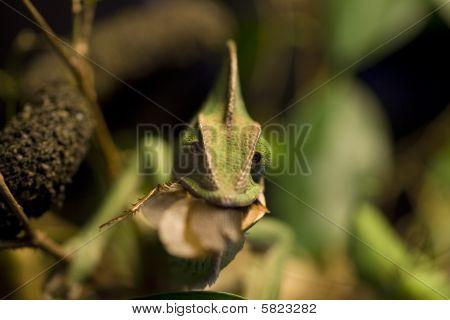Chameleons Snack