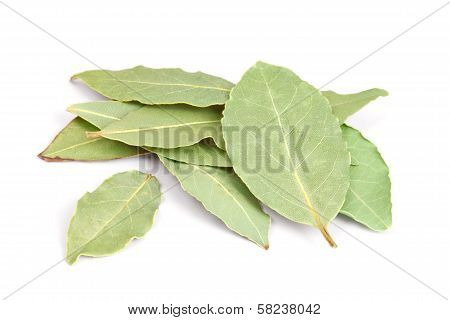 Bay Leaves Isolated On White Background.