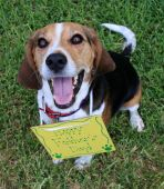 Happy Father's Day Beagle dog smiling excited poster