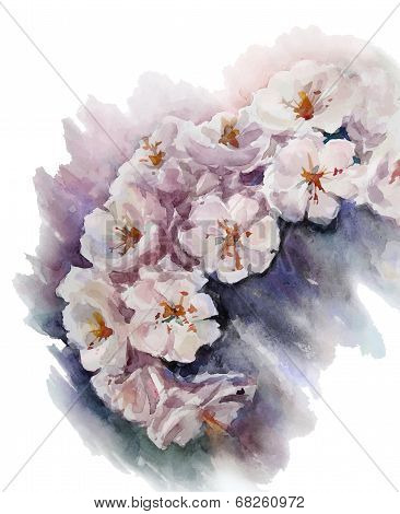 watercolor cherry blossom. Flower painting. Vector EPS 10.