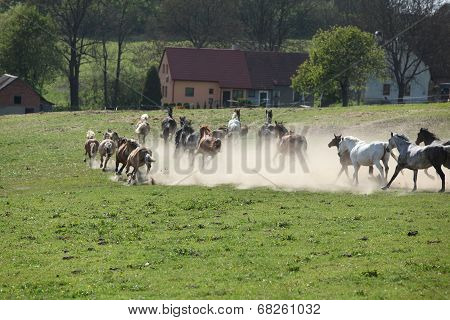 Batch of horses running away in the dust in front of ranch poster