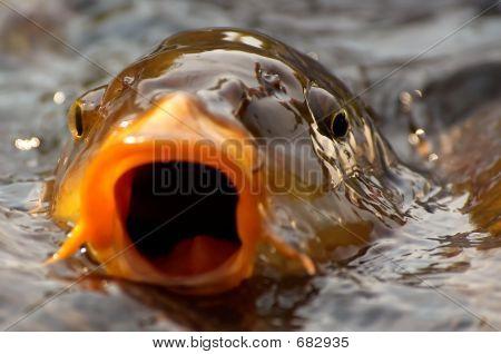 Fishy Background