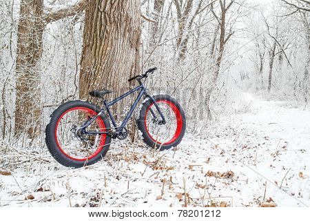 Winter biking. Fat Tire Bike.