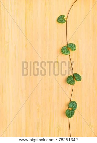 Natural Texture Of Tree Background With Framed Branch Tendril Ceropegia Woodii