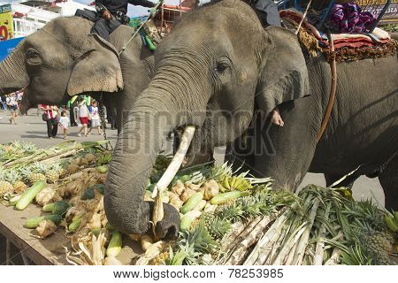 Drivers feed elephants at Elephant Buffet in Surin, Thailand.
