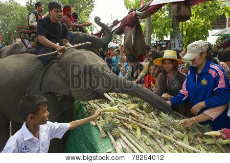People feed baby elephant at Elephant Buffet in Surin, Thailand.