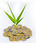 Mexican Peso out of which a plant grows. poster