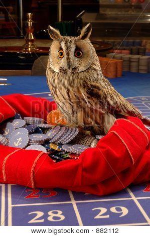 owl berd magic casino gift present sack poster