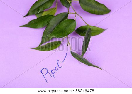 Green pipal twig with inscription on paper background