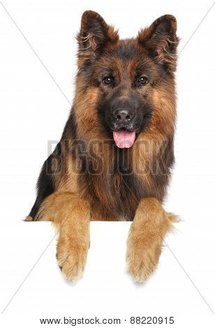 German Shepherd Dog On A White Background