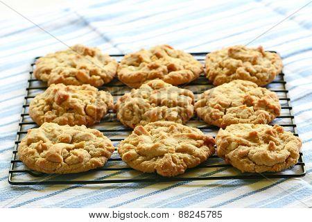 Freshly Baked Peanut Butter Cookies
