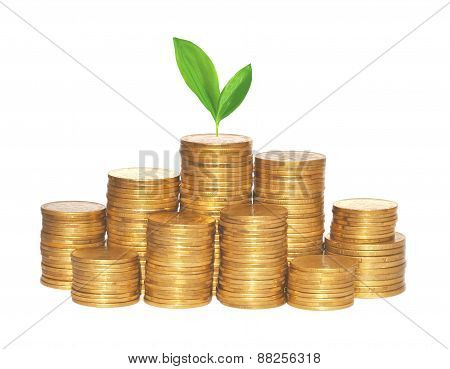 Golden Coins And Green Plant Isolated On White