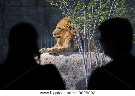 Observing the King