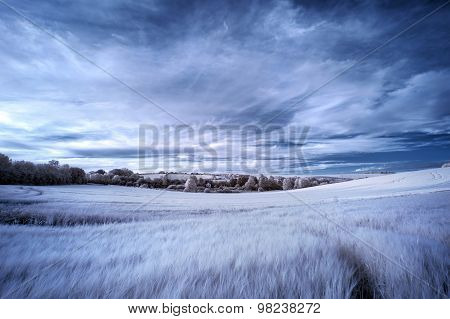 Surreal false color infrared Summer landscape over agricultural fields poster